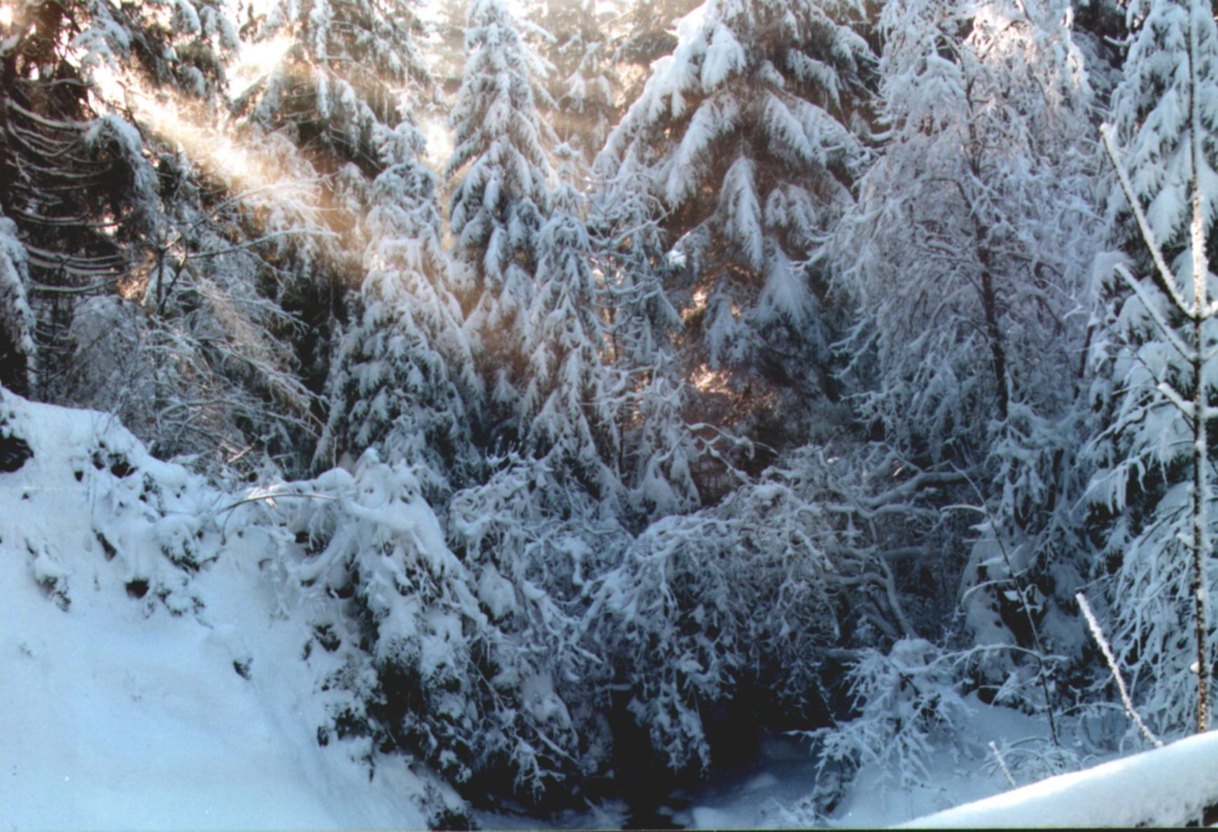 weihnacht2005