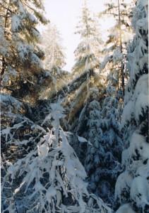 Weihnacht2008