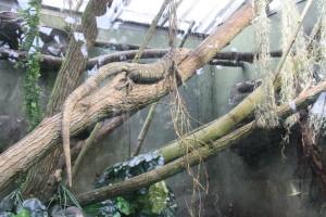 Und nun der Zoo Leipzig - Gondwanaland. Eine lässige junge Dame so früh am Morgen.