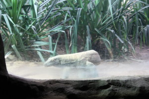 ... und begegnen in der Gegenwart wie auf Bestellung einem lebenden Fossil: dem jungen Komodowaran.