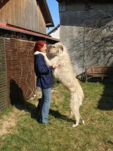 Damit ihr mal wisst, WIE groß so ein Wolf ist. 2007, ich bin noch 1,79, und Sally macht sich klein, um keine Dominanz zu zeigen