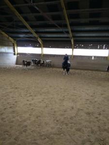 Elmar treibt die Kühe erst mal hinter, bevor wir sie dann an der langen Bahn runtertreiben müssen.